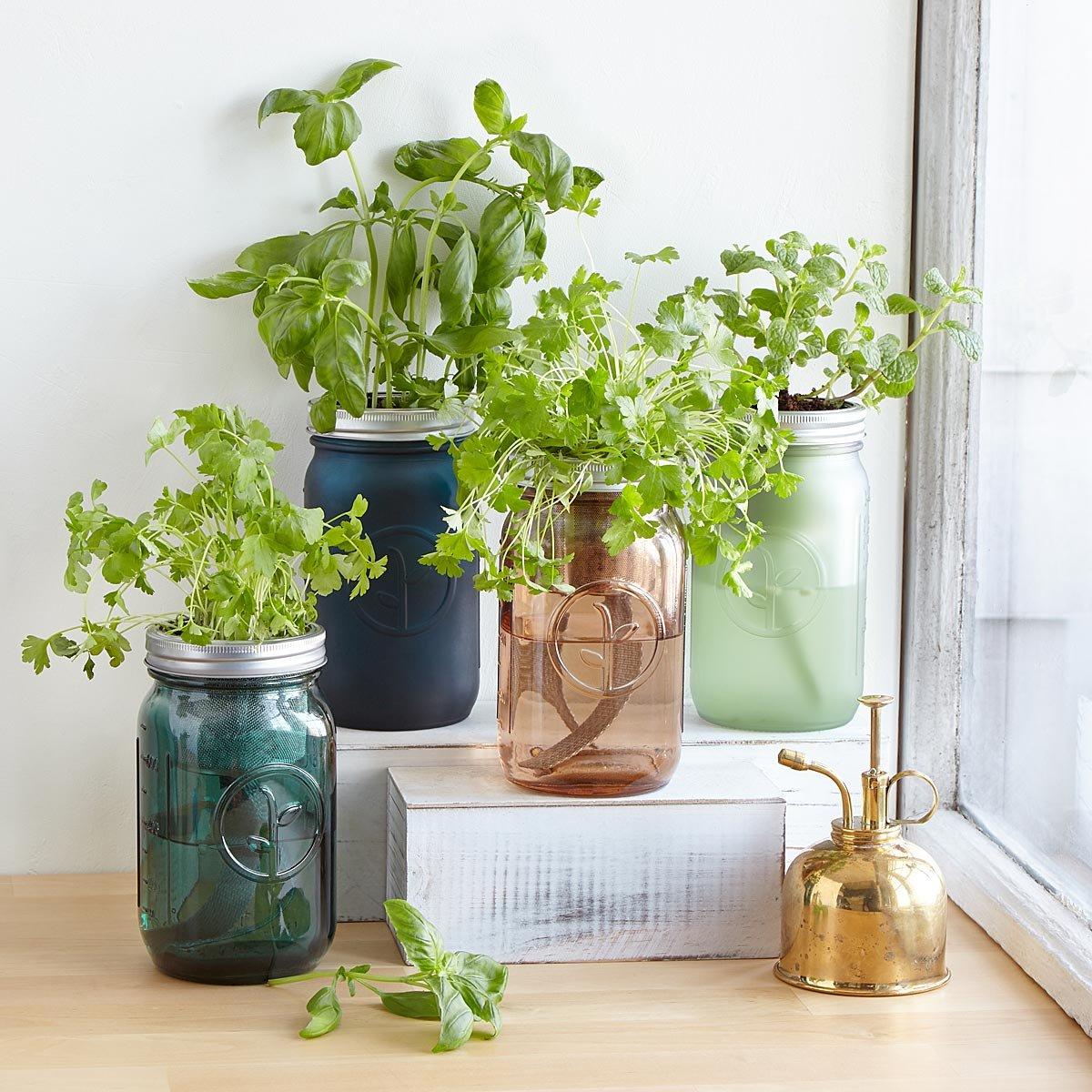 Mason jars used as herb holders