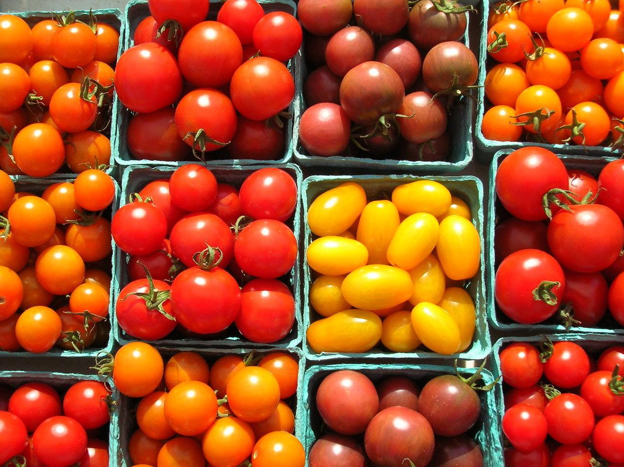 A range of fresh tomatoes
